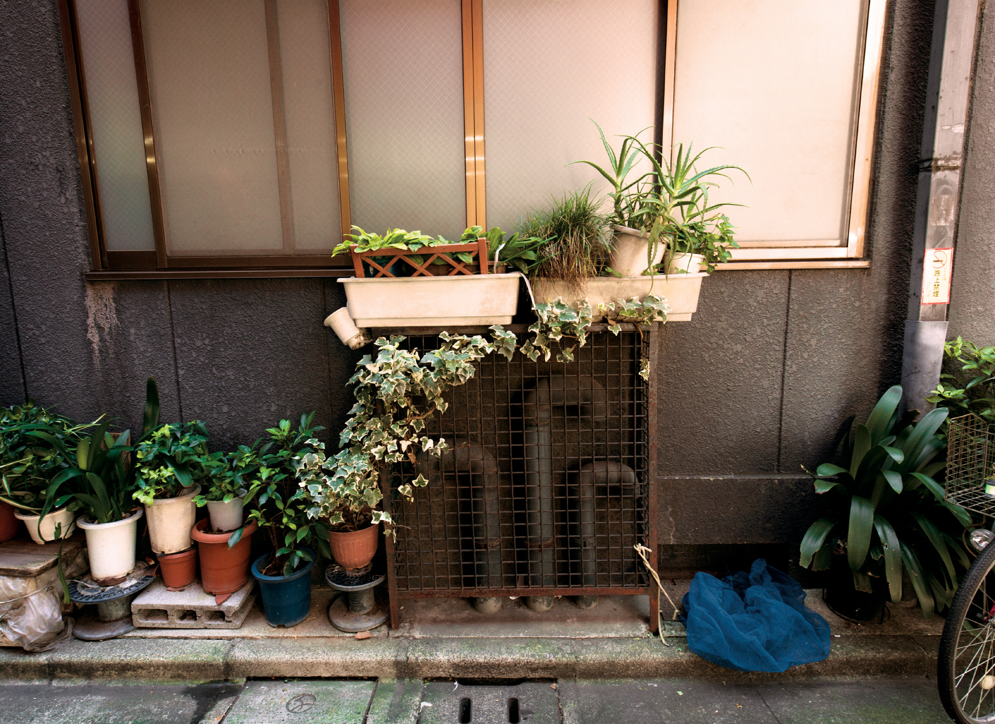 Photograph taken of the side of a persons house in Tokyo, Japan with plants and a bicycle under their window