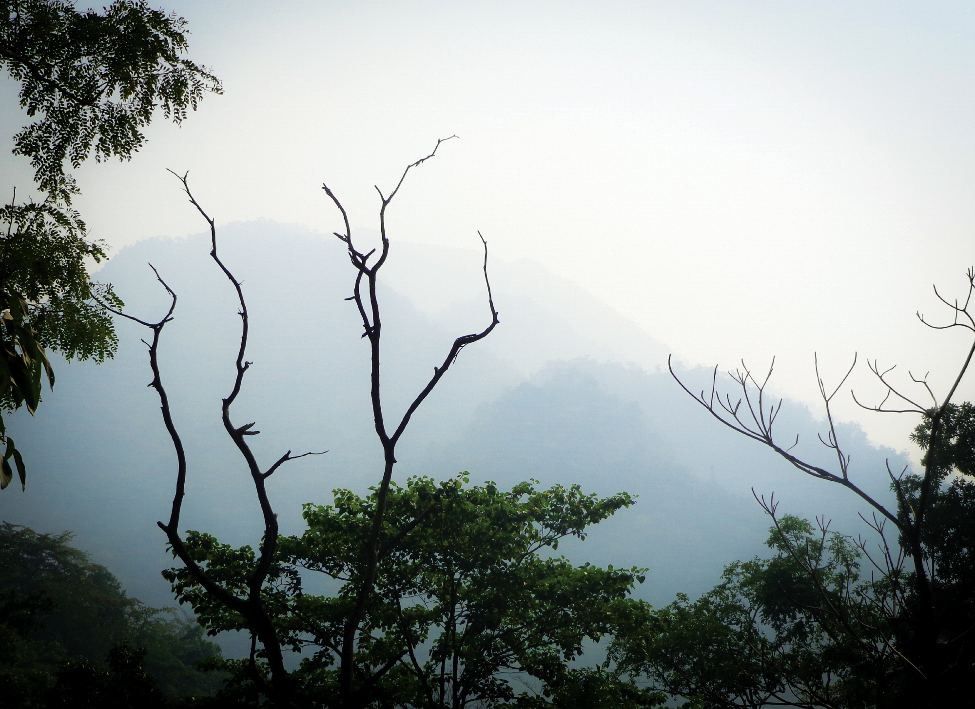 Photograph of trees in the foreground and mountains as far as the eye can see off in the distance. Taken in Rishikesh, India.