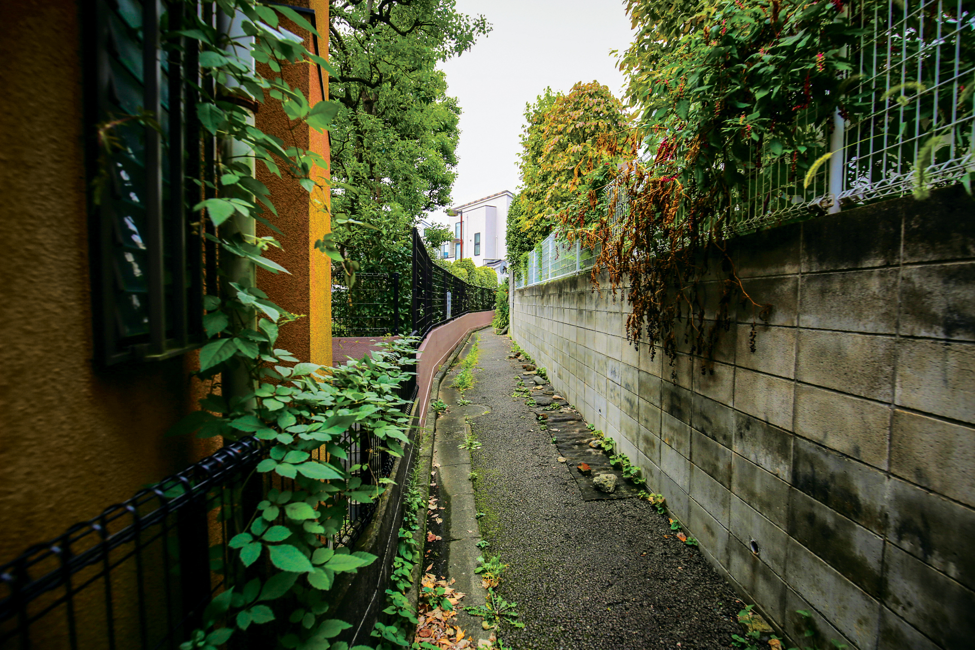 Walking through the back streets of Tokyo, Japan, surrounded by homes and overgrown plants.