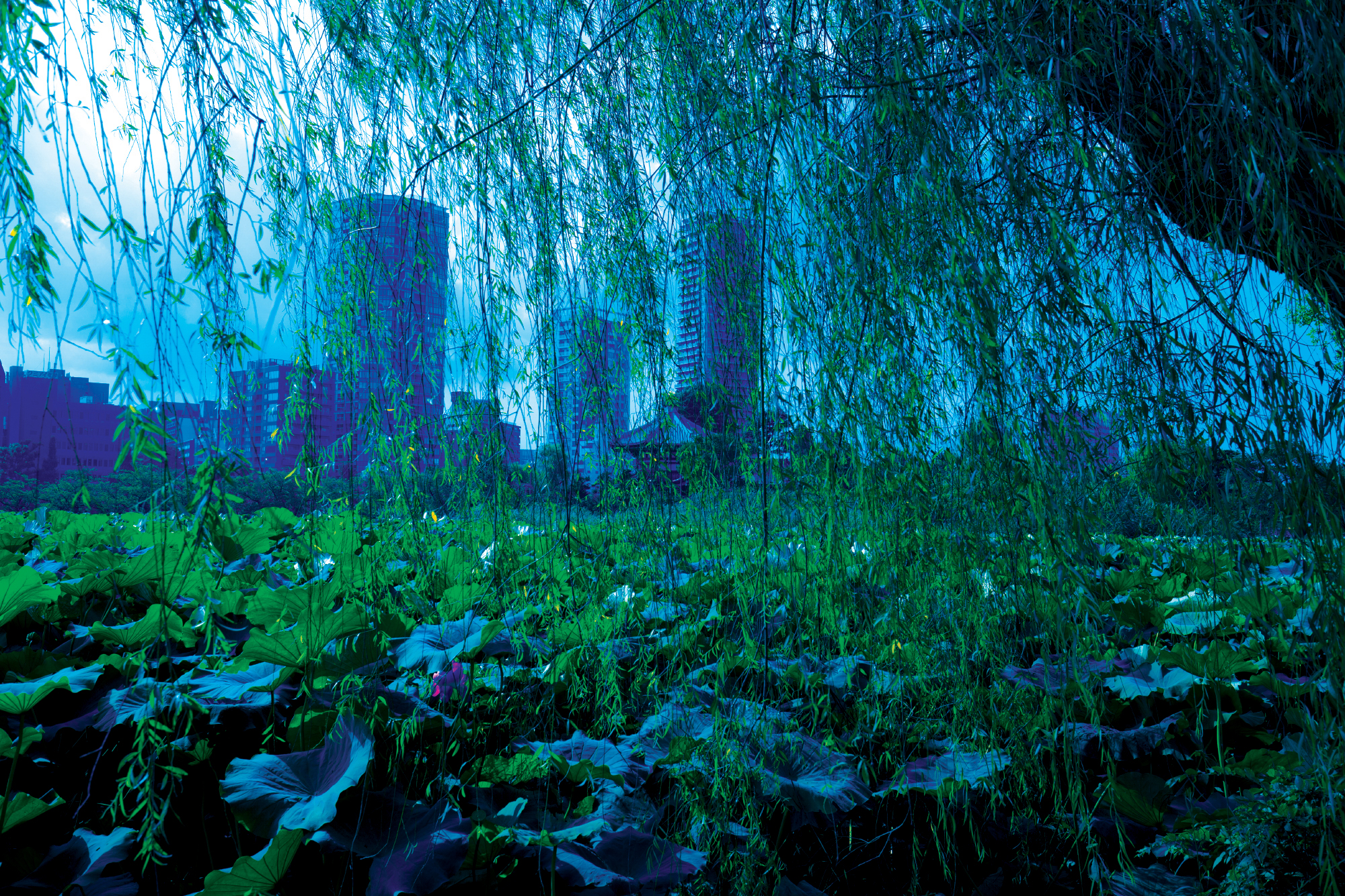 A giant Weeping Willow tree with a view of Tokyo, Japan in the background.
